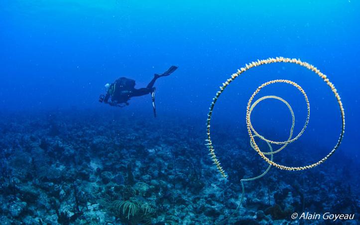 Plonger plus longtemps avec l'Air Enrichi Nitrox.