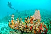 Une activité touristique, la plongée sous-marine.