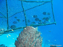 Nasse sans flotteur en surface posée sur le récif.