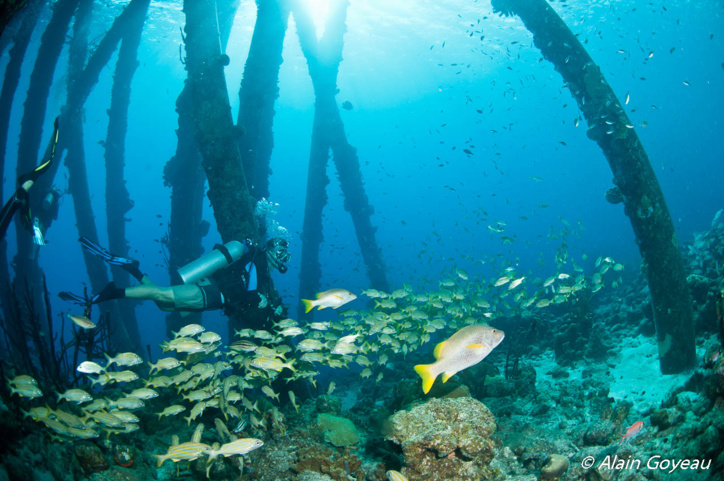 Plongez Padi à Bonaire !