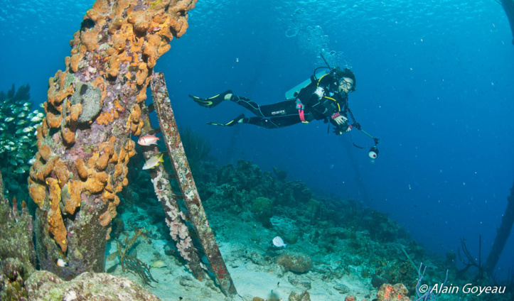 Plongez Padi dans les Caraïbes.