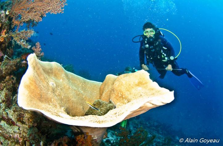 Plongez Padi en Indonésie.