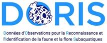 Logo Doris de la FFESSM.