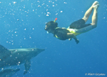 Les Dauphins Sténos ne manque pas une occasion de venir jouer avec les plongeurs en Guadeloupe.
