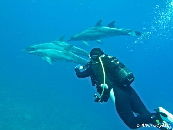 Surprise au retour de plongée, des dauphins nous attendez sous le bateau d'Eden Plongée en Guadeloupe.