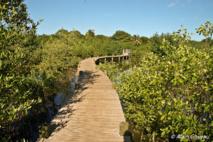 Le sentier aménagé du Marais de Port-Louis vous permet de découvrir les richesses du milieu naturel de la mangrove.