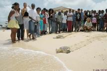 Soignées au centre de soin, les tortues regagnent la mer.