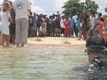 La communication est essentielle pour la sauvegarde des tortues marines de Guadeloupe.