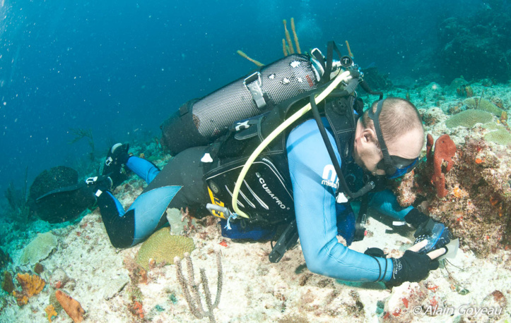 Cueillette des échantillons en plongée sous-marine.
