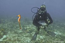 Certains hippocampes se sont fixés, d'autres ont préféré partir à l'aventure.
