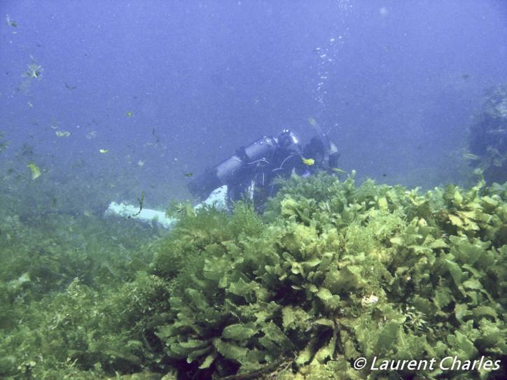 Les algues sont quant à elles collectées « à vue ».