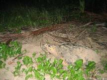 Une nuit avec la patrouille du réseau tortues marines.
