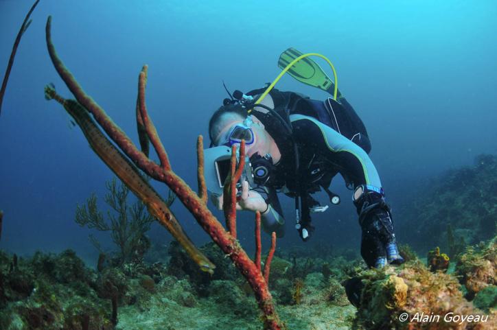 Le poisson trompette imite à la perfection une éponge corde.