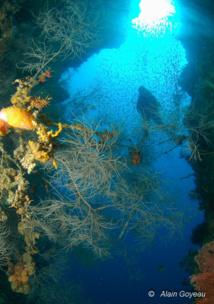 Plongeur en contre-jour, il faut trouver le bon équilibre.Détroit de Lembeh, Indonésie.