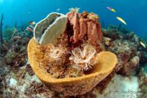 Eponges, coraux, vers, poissons forment une biocénose.