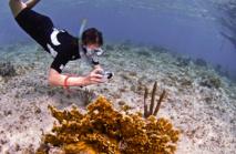 Pendant votre randonnée subaquatique vous pourrez pratiquer la photographie sous-marine.