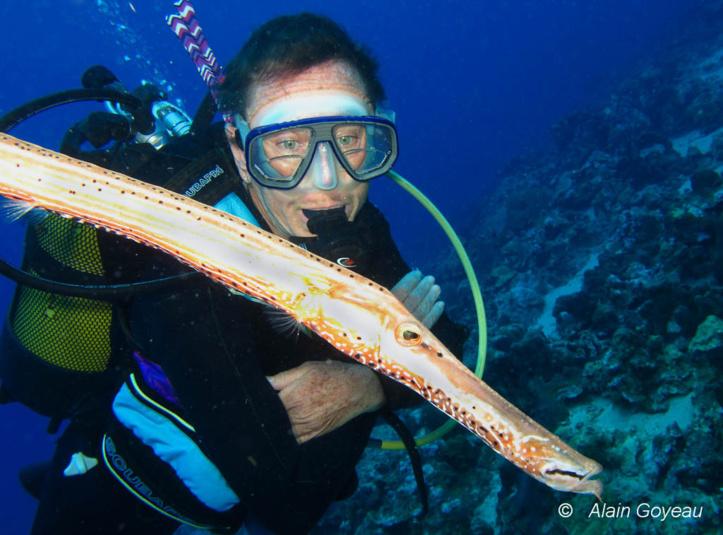 Dans le monde sous-marin, les animaux n'ont pas peur des plongeurs.