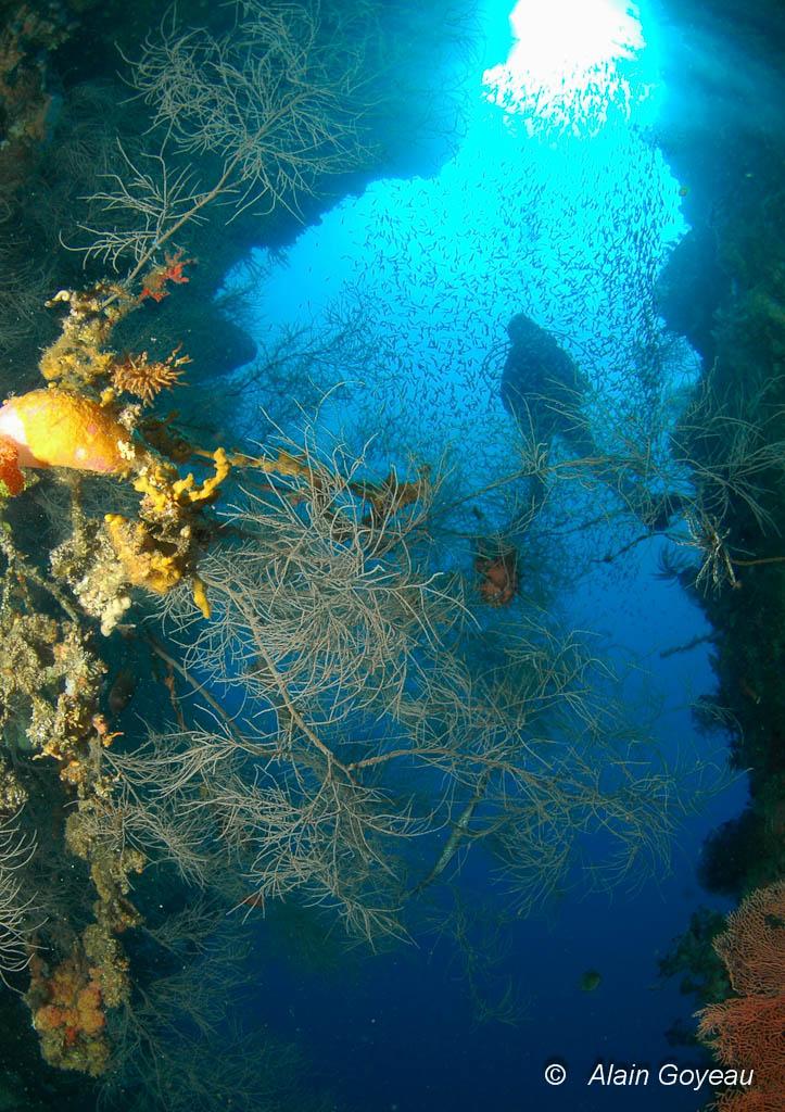 La spécialité plongée profonde ou la compétence PE40 ouvrent de nouveaux horizons au plongeur.