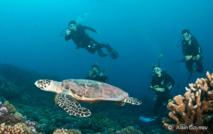 Les tortues sont des reptiles descendants direct des dinosores.