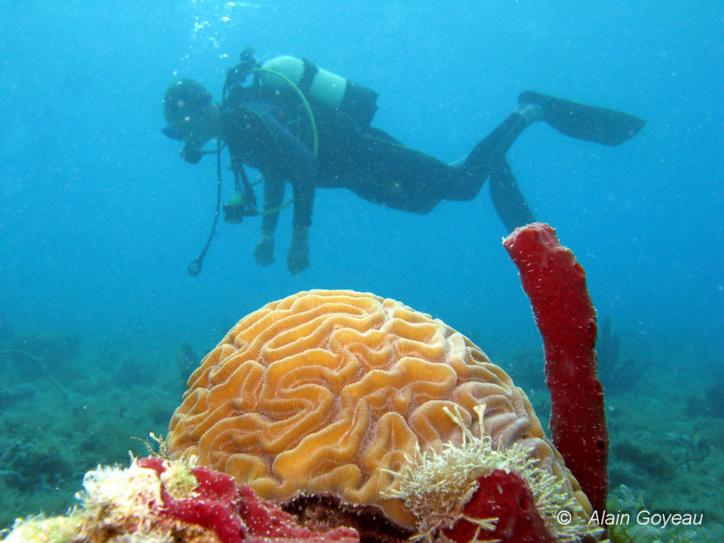 Plongée exploration en Guadeloupe dans l'espace 0 à 20 mètres.