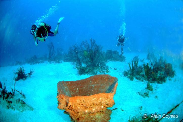Les grandes éponges et gorgones de la plongée du Tombant d'Antigues.