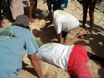 L'ouverture du nid sur la plage de Port Louis. Les oeufs sont enterrés à 1 m de profondeur.