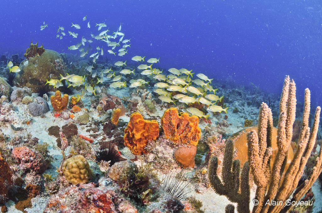 L'Aquarium, un site idyllique pour faire son baptême de plongée.