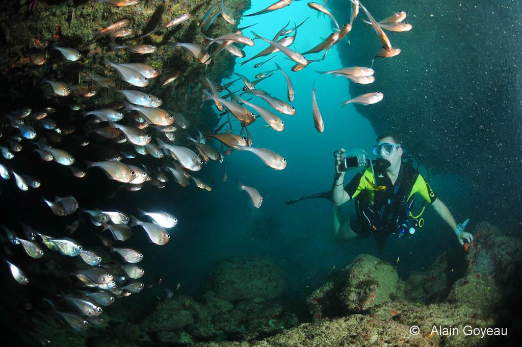 Des centaines de Hachettes Cuivrées habitent cette Arches  - Plongée Guadeloupe