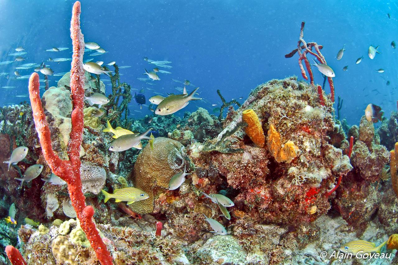Baptême de plongée Guadeloupe.