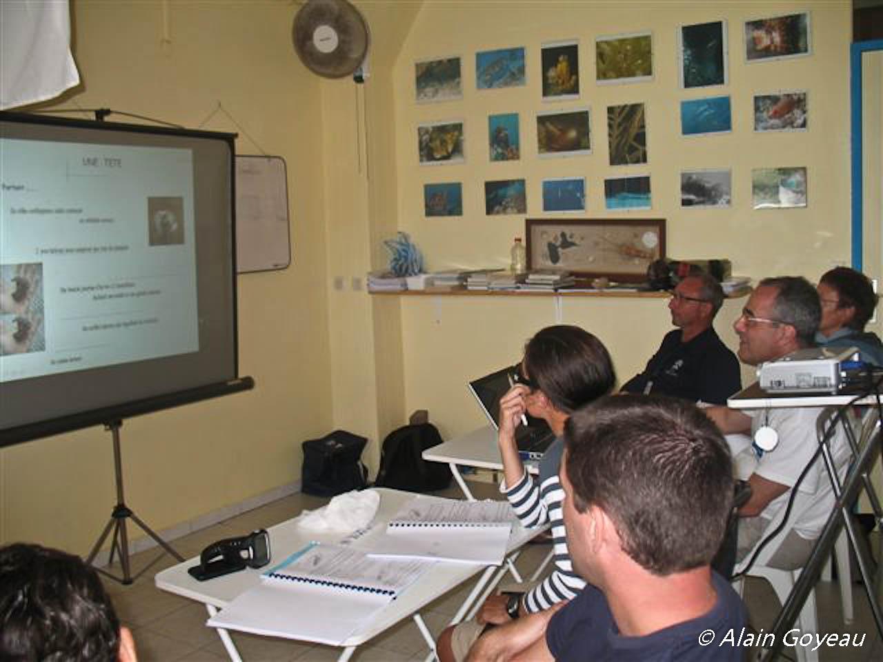 Stage de biologie sous-marine à Eden Plongée en Guadeloupe pour une meilleur connaissance du milieu marin.