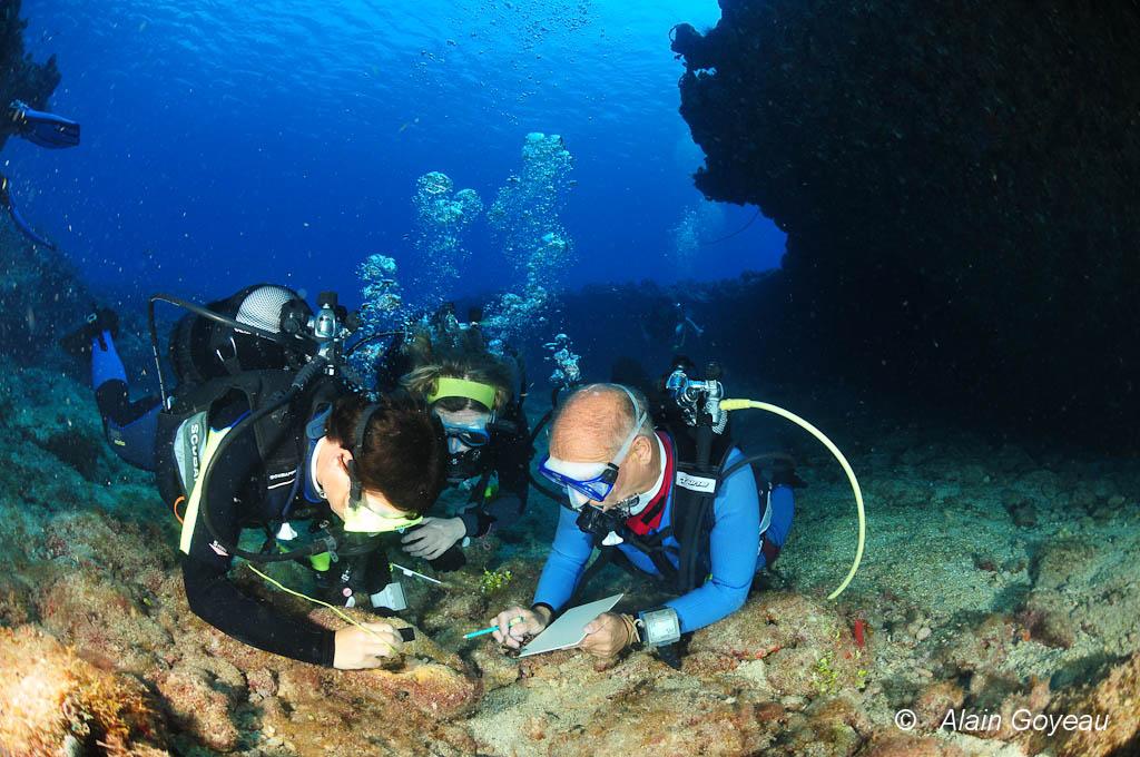 Pendant un  stage de biologie sous-marine en Guadeloupe, les petites bêtes attirent l'attention des stagiaires.