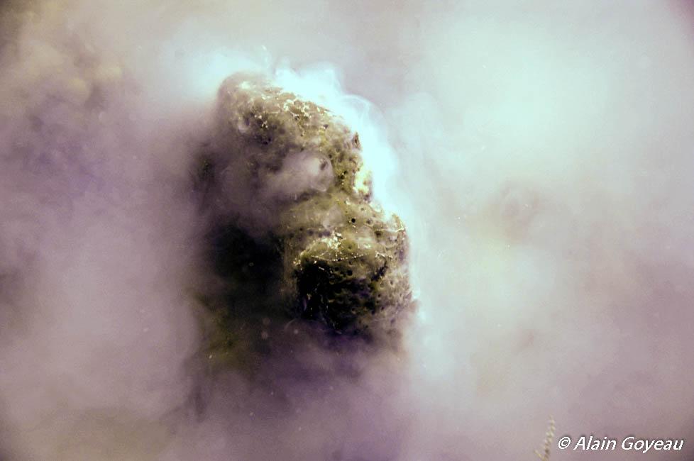Les éponges mâles libérent un nuage de spermatozoïdes.