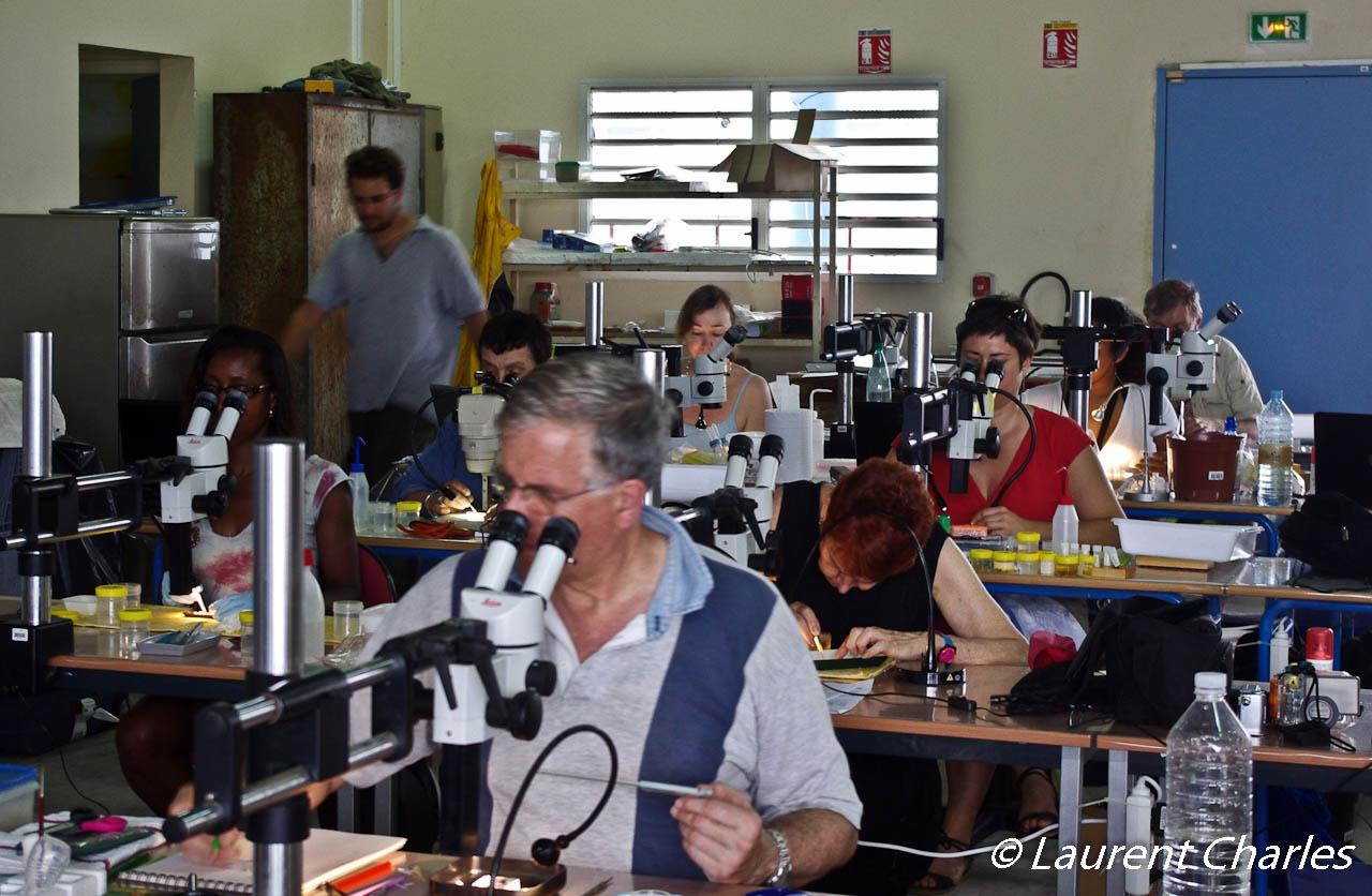 Observation et identification des spécimens à l'aide d'une loupe binocualire.