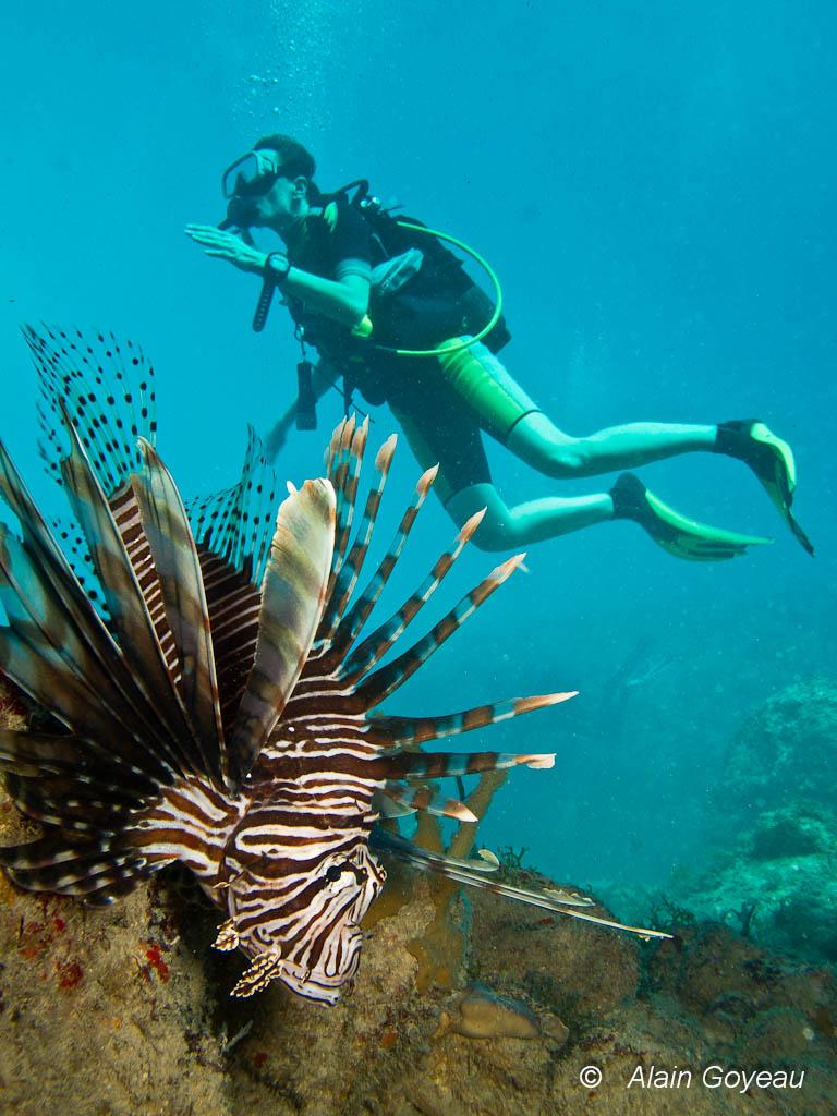 Les poissons scorpions passent souvent inaperçu du plongeur.