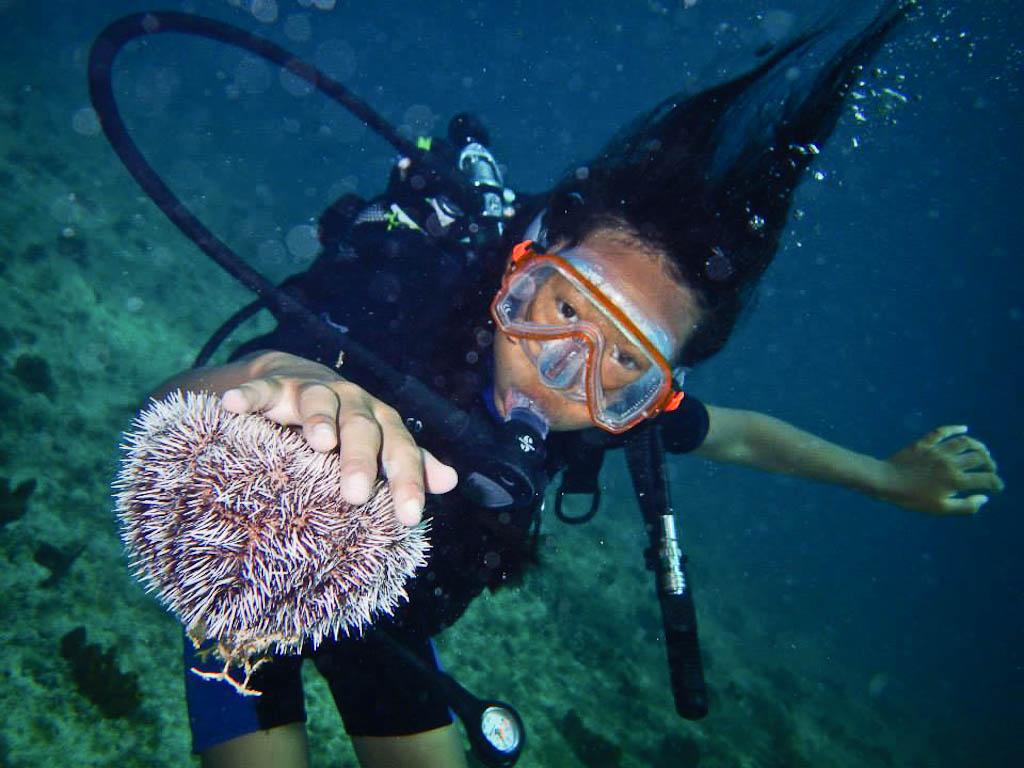 Le baptême de plongée, un moment ludique. Rencontre avec un oursin blanc.
