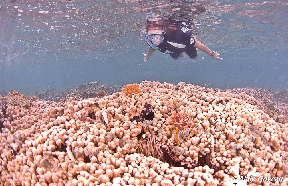 Découverte du récif de Guadeloupe.