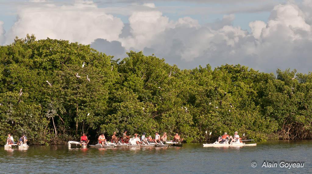 Découvert en VTT de mer de l'Ile aux Oiseaux, Grand Cul de Sac Guadeloupe.