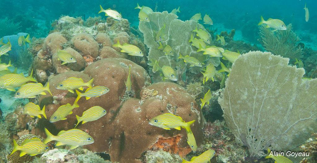 Découverte de la faune subaquatique en randonnée palmée.