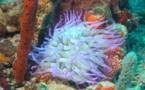 La Réglementation Plongeur Niveau 2 FFESSM.