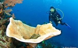 Pourquoi choisir une formation de plongeur PADI ?