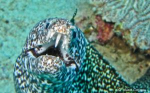 Accidents et dangers de la faune marine en Guadeloupe.