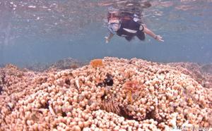 La Randonnée Subaquatique ou Snorkeling dans le Parc National de Guadeloupe.