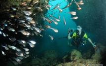 Les Grottes de Port Louis et du Nord Grande Terre de la Guadeloupe.