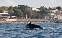 La plongée sous-marine en Guadeloupe