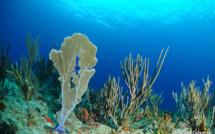 Cours de Biologie sous-marine en Guadeloupe.