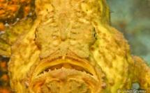 Les poissons étranges du récif.