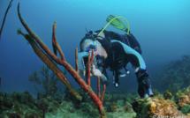 L'art du camouflage, dans le monde sous-marin.
