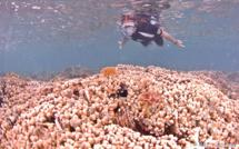 La Randonnée Subaquatique ou Snorkeling.