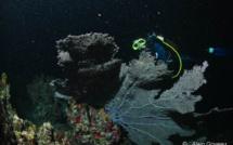 La mystérieuse vie nocturne de la faune aquatique en Guadeloupe.
